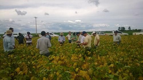 Os encontros promovidos pela Abapa, reúnem produtores de algodão, gerentes de fazendas, consultores e técnicos do programa