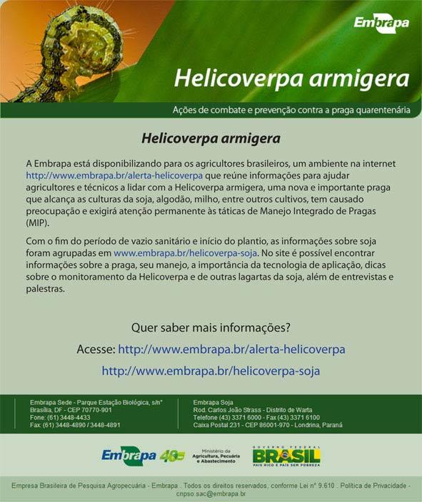 armigera-heli