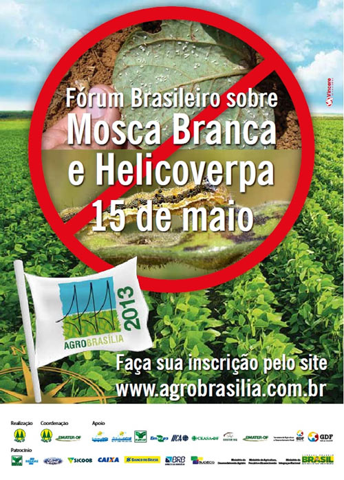 helicoverpa-maio-int