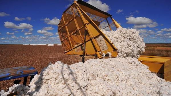 Governo chinês pretende reduzir seus largos estoques de algodão (Foto: Ernesto de Souza/Ed. Globo)